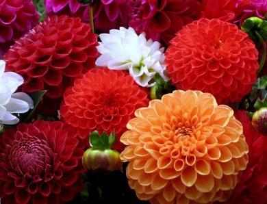 Dünyanın En Güzel Hediyesi Çiçekler